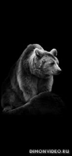 Black animals 1080x2340