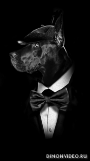 Black animals (ART) 1080X1920