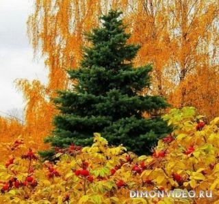 Природа рисует осень