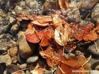 Листья на воде.