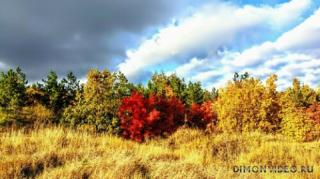 Золотая осень наступила