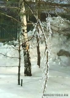 Зимняя ветка