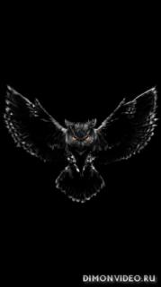 Owl 1080x1920, 1080x2160, 1080x2220, 1080x2340