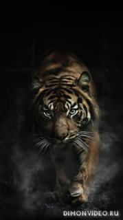 Tiger 1080x1920, 1080x2160, 1080x2220, 1080x2340