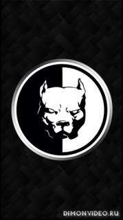 Pit bull 1080x1920, 1080x2160, 1080x2220, 1080x2340