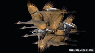 ptitsy-staia-polet-migratsiia