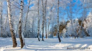 sneg-beriozy