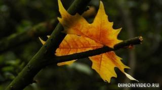 listia-osen-priroda-08