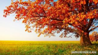 Autumn_wallpapers_004