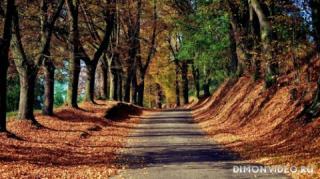 Autumn_wallpapers_010
