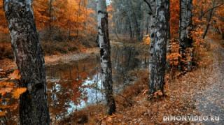 Autumn_wallpapers_015