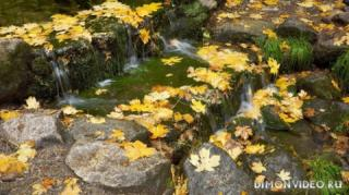 Autumn_wallpapers_016