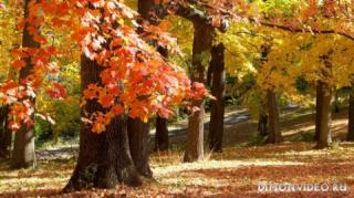 Autumn_wallpapers_017