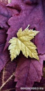 listya-osen-priroda