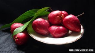 malaiskoe-iabloko-frukt
