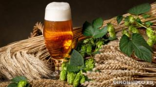 pivo-zerna-kolosia