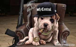 Gangster dog 1920x1200