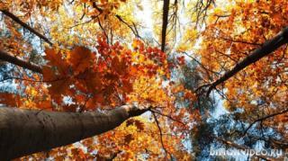 Autumn_wallpapers_03