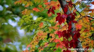 Autumn_wallpapers_04