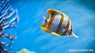 podvodny-mir-005