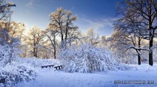 zima-priroda-sneg-derevya