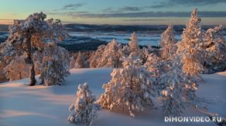 zima-sneg-derevia-priroda