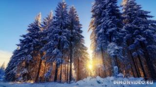 zima-sneg-les