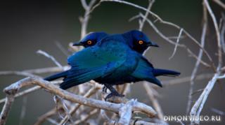 ptitsy-derevo-priroda