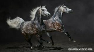 koni-beg-gratsiia-fon