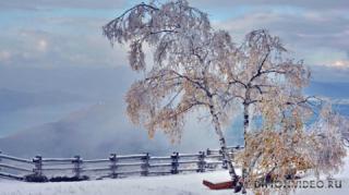 berioza-listia-sneg