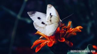 babochka-makro-cvetok