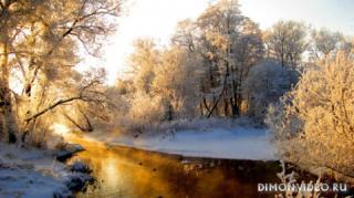 sneg-zima-derevya-v-inee-les