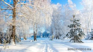 usmanskii-bor-voronezhskaia-oblast