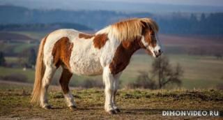 Самые красивые лошади мира 19