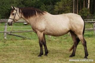 Самые красивые лошади мира 29