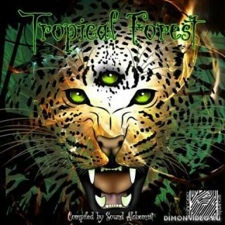 VA - Tropical Forest