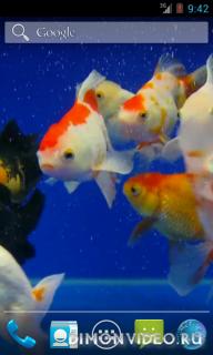 Золотая рыбка видео живые обои