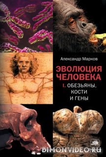 Эволюция человека. Обезьяны, кости и гены - Александр Марков