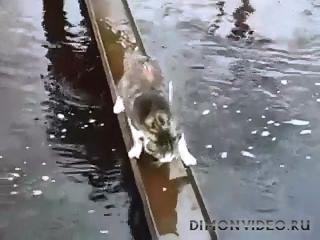Умный кот. Очень умный! )