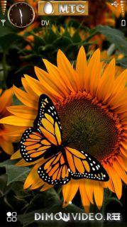Golden Butterfly by Kallol v5