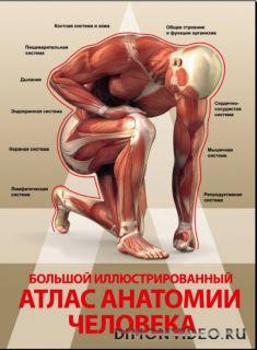 Большой иллюстрированный атлас анатомии человека - Анна Спектор