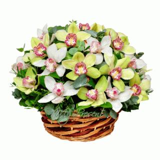 Заказ цветов в Праге - уникальный сервис от My-present.ru
