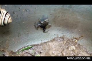 Лягушки улитки черви