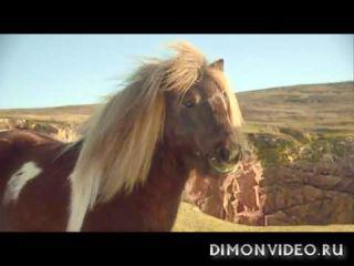 Танцующий пони