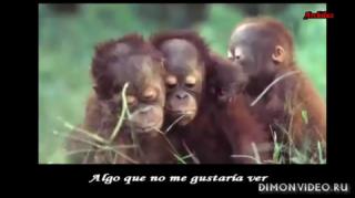 Stratovarius - Paradise ( Video Greenpeace)