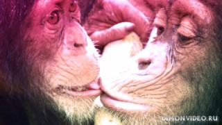 Benny Benassi & SOFI TUKKER - Everybody Needs A Kiss (Official Video)